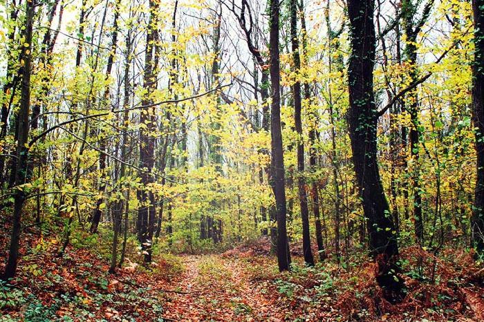 جنگل بلگراد ترکیه