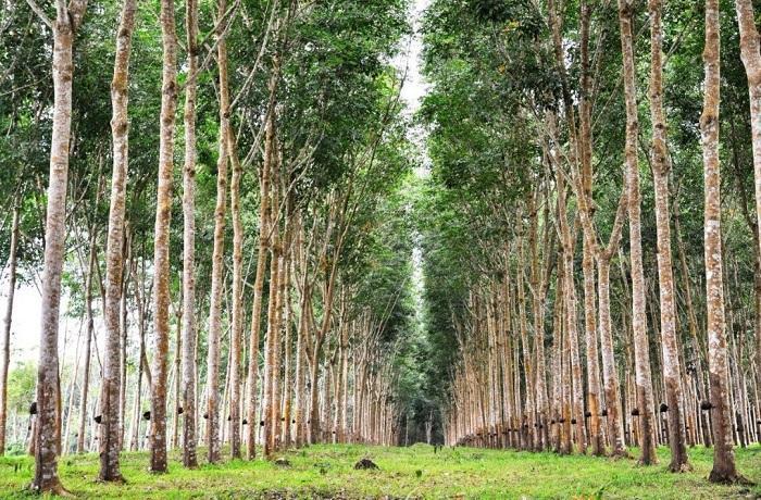 منابع جنگلی ساخت پارکت